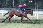 呂卓賢於週五早上在克爾活馬場策騎一匹馬進行晨操。
