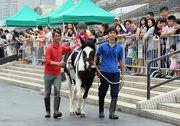 小馬策騎樂、與雪特蘭小馬合照、馬匹護理及釘甲示範