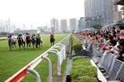 圖二十四、二十五<br> 同日舉行新馬季草地試閘,入場人士結伴到草地跑道旁,感受馬匹奔馳及衝刺的震撼。