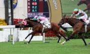 圖一、二<br> 由潘頓策騎的蘇保羅馬房賽駒「友瑩格」(5號馬),今午在沙田馬場勝出精英碗(香港二級賽1200米),亞軍為「積多福」(11號馬)。