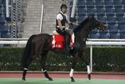 阿基米德;操後到馬匹亮相圈熟習環境
