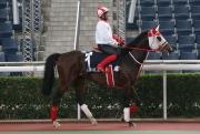 大賽波士;操後到馬匹亮相圈熟習環境