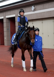 世界王牌;操後到馬匹亮相圈熟習環境