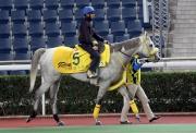 瑞草祥龍;操後到馬匹亮相圈熟習環境