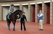 浪琴表香港瓶參賽馬「漫天飄雪」今早在沙田馬匹亮相圈內進行訓練時,練馬師司徒德爵士在旁監察。
