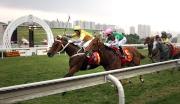 圖1、2、3:<br> 香港速度系列首關賽事Kent & Curwen 百週年紀念短途盃,今日在沙田馬場舉行,韋達策騎告東尼訓練的「幸福指數」(1號馬、黃色綵衣)勝出這場途程1000米的香港一級賽。