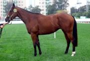 父系同為「燈塔島」的第11號拍賣馬。