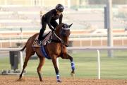 杜拜金莎軒錦標戰馬「天久」於美丹馬場作輕鬆操練。