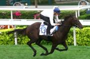 圖 1, 2, 3, 4:<br> 2015年香港國際馬匹拍賣會(3月)將於下週六3月14日舉行,一眾參與拍賣的馬匹今晨於沙田馬場草地跑道作試跑示範。