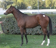 「美麗大師」於2012年一項意大利週歲馬拍賣會上以最高價售出。
