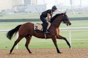 另一匹杜拜金莎軒錦標參賽馬「好好計」今晨於美丹馬場泥地跑道上試跑。