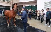 部分準買家於試跑示範結束後到馬房檢視拍賣馬匹。