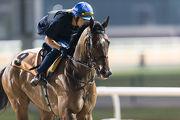 杜拜金莎軒錦標的香港參賽馬匹「積多福」,今晨在美丹馬場的泥地跑道作慢工夫出試。