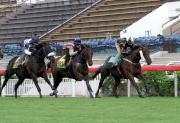 圖 1, 2:<br> 「步步友」(近欄)由莫雷拉策騎,於週二早上在沙田馬場參加草地千六米試閘,為本週六出發前往英國參賽作好準備。
