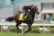 浪琴表香港短途錦標參賽馬「翠面棕駿」,今晨在莫雷拉胯下於沙田草地跑道進行一課快試。