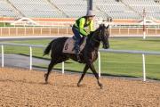 「三和福將」今晨在主跑道進行操練,練馬師賀賢及騎師韋達均在場督操。