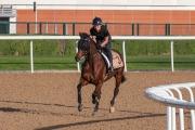 「好好計」在練馬師鄭俊偉及騎師巫斯義督操下在美丹馬場進行輕鬆慢跳。