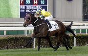 圖一、二、三、四: 寶馬香港打吡大賽今日於沙田馬場舉行,由約翰摩亞訓練、布文策騎的「明月千里」(2號馬、黃色綵衣)於賽事末段力壓廄侶「凱旋生輝」(9號馬、灰色/深藍色綵衣),勝出此項香港一級賽。
