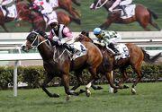 圖1, 2: 香港二級賽主席錦標今日於沙田馬場舉行,由告東尼訓練的「美麗大師」(4號馬),於郭能胯下勝出此項途程1600米的賽事。