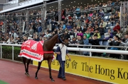 Photo 1, 2<br> <em>Lucky Nine</em> parades for the last time at Sha Tin Racecourse in front of his faithful fans.