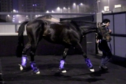 圖1, 2<br> 「里見皇冠」抵達沙田馬場。