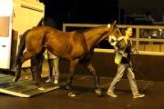 圖一、二<br> 「浪漫昇華」抵達沙田馬場。