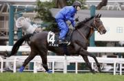 「里見皇冠」今晨於策騎員高橋智大胯下於沙田馬場草地跑道進行操練。