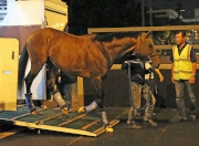 圖一、二<br> 「滿樂時」抵達沙田馬場。