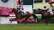 圖1, 2<br>  由高伯新訓練、史卓豐策騎的「雄心巨龍」(6號馬),勝出今日於沙田馬場舉行的香港三級賽賽皇太后紀念盃 (2400m)。