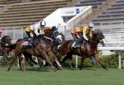 「大運財」(前駒、黃色綵衣)今晨在史卓豐胯下於沙田馬場參加一組草地1000米試閘,結果以第三名衝線。
