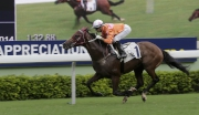 Photo 1, 2<br> John Moore-trained Helene Paragon, ridden by Joao Moreira, wins the Sha Tin Mile Trophy at Sha Tin Racecourse today.