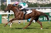 由練馬師費伯華訓練、騎師湛明諾策騎的「新桂」,於昨日(8月15日)在法國多維爾馬場勝出香港賽馬會拜倫錦標。