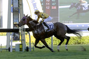 Mr Bogart claims a smart victory over 1200m at Sha Tin on his latest outing.