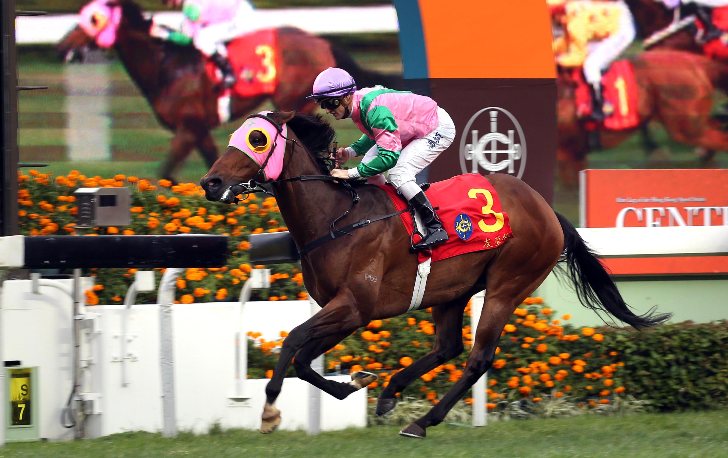 Ridden by Zac Purton, Aerovelocity took the HKG1 Centenary Sprint Cup at Sha Tin last season.