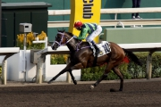 Douglas Whyte partners the Chris So-trained Team Fortune to win the Po Leung Kuk Centenary Cup (Class Three, 1200m) at Sha Tin Racecourse today.