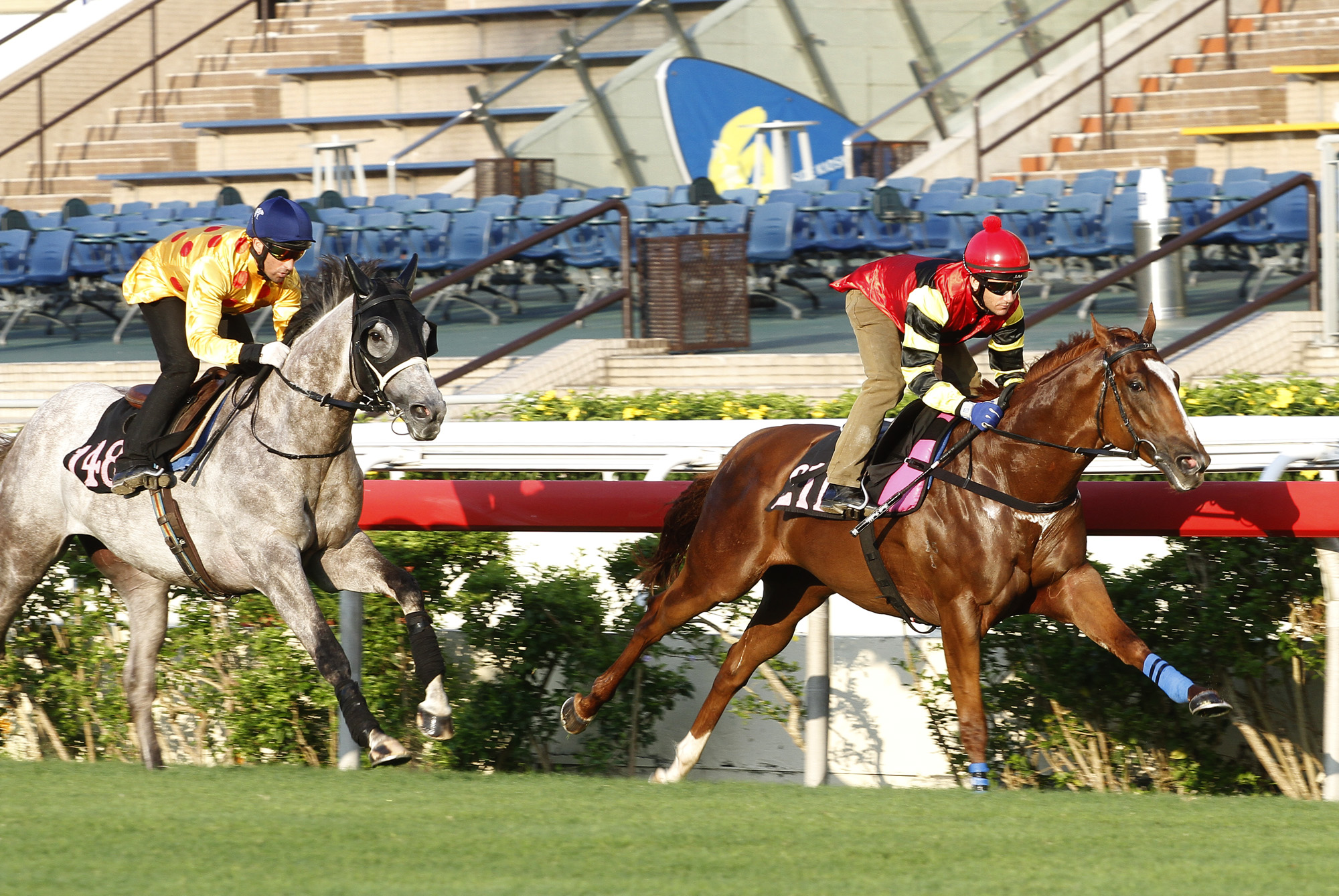 Lucky Bubbles (right) passes the post first - with Giant Treasure second (left) - in a 1000m turf barrier trial at Sha Tin Racecourse this morning.