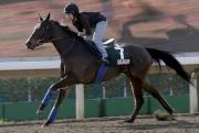 「更凌駕」今早在沙田全天候跑道進行操練。