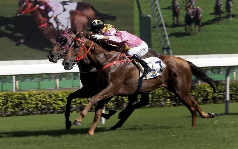 Sun Jewellery (No. 7) gets the better of Dashing Fellow to win the Premier Cup at Sha Tin last season.