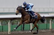浪琴表香港短途錦標參賽馬「新力風」今晨於同一組試閘中掄元。