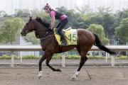 由摩加利訓練的浪琴表香港短途錦標參賽馬「記錄在案」今晨於沙田泥地跑道上作慢工夫出試。