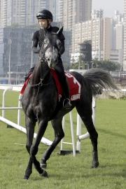 日本代表「榮進之光」(浪琴表香港盃)前往沙田泥地跑道進行操練。