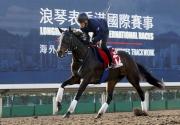 「皇后寶戒」今早在沙田馬場的全天候跑道進行操練。