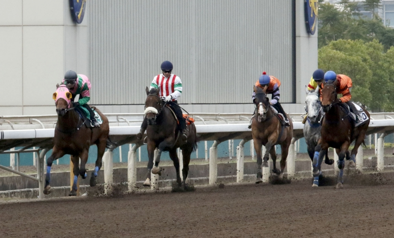 Who Dat Singa (second from left) runs third in a barrier trial today despite Silvestre de Sousa losing his irons at the break.