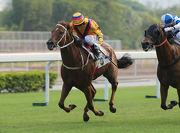 「勝得威」迄今在港已曾兩勝頭馬。
