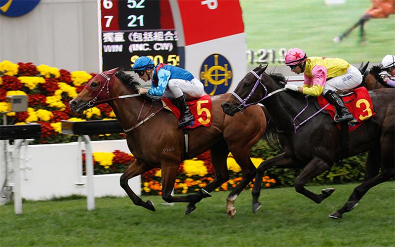 由約翰摩亞訓練的「無敵飛龍」(5號馬),於祈普敦胯下勝出今日於沙田馬場舉行的一班1400米賽事賀年盃。