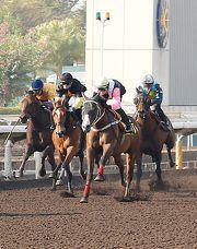 「美麗大師」(粉紅袖) 在今晨第一組泥地試閘中以第四名過終點。