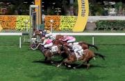 圖一, 二<br>跑馬地馬場是晚舉行跑馬地錦標(1200米第一班賽事),結果由田泰安策騎的「越影」(8號)及莫雷拉策騎的「海翡翠」(12號)取得平頭冠軍。