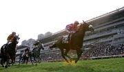 「誰可拼」(5號) 於2014/15年度馬季在沙田馬場勝出短途錦標。