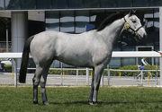圖二, 三<br> 第15號拍賣馬是在愛爾蘭培育的灰色閹馬,與「好易搵」同父。