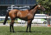 第16號拍賣馬為在澳洲培育、父系Hussonet的閹馬,與「精彩日子」及「詠彩繽紛」同父。